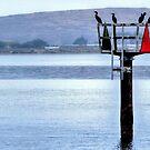 bird watch... by Stephen Burke