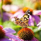 Painted Lady On A Flowerbed by funnypixel