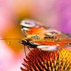 Painted Lady And The Sweet Feast Of Colors by funnypixel