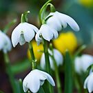 A Sign of Spring by vivsworld