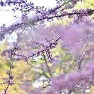 Red Bud Magic 1 by photolodico