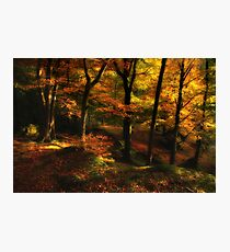 Penny Rock Woods Photographic Print