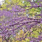 Red Bud Magic 2 by photolodico