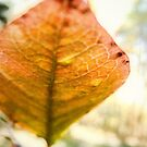 Blueberry Leaf in the Autumn by LouiseK