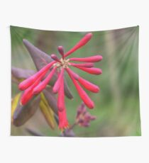 Trumpet Honeysuckle - Buds of Coral Woodbine Wall Tapestry