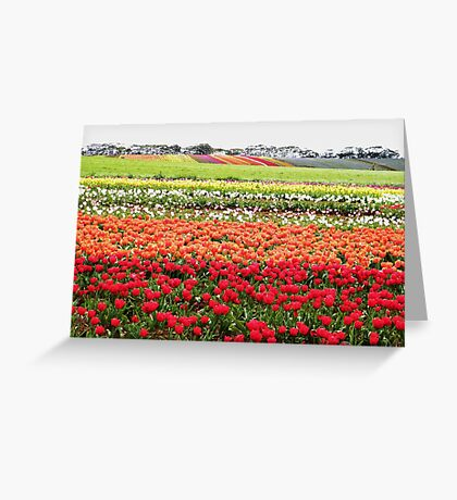 Bands of beauty Greeting Card