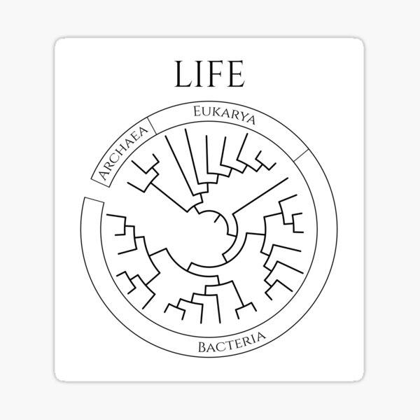 Circular Tree of Life Sticker