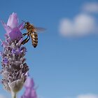 Bee-autiful Lavender by Penny Kittel
