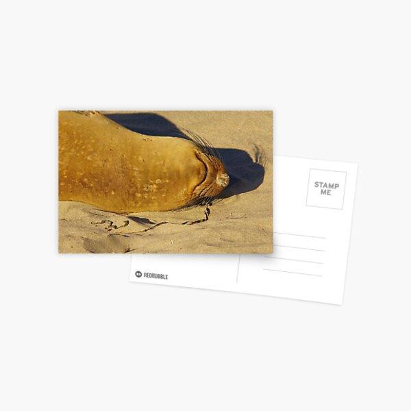 Crashed Postcard