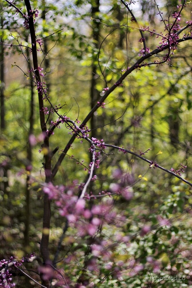 Red Bud Magic 5 by photolodico