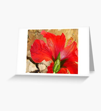 Back Of A Red Hibiscus Flower Against Stone Greeting Card