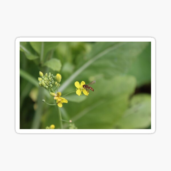 Hoverfly in the Vegetable Garden Sticker