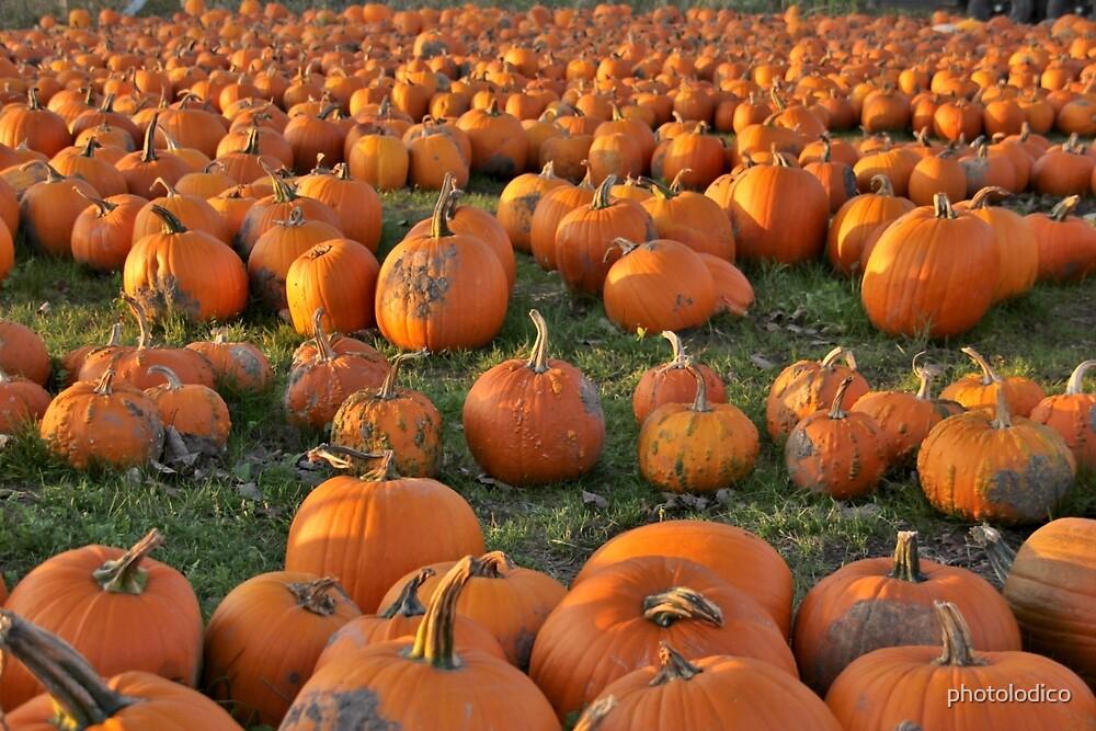 Grandma's Pumpkin Patch by photolodico