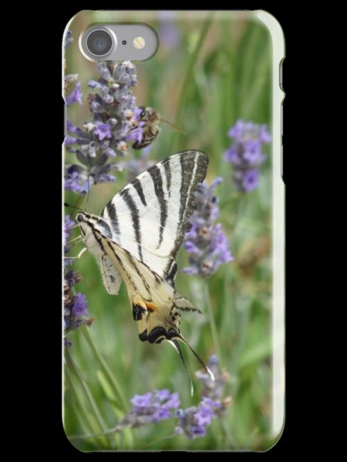 Scarce Swallowtail  by Sylvie Lebchek