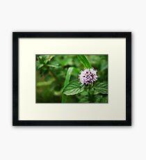 Clover Flower  Framed Print
