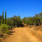 On the Trail by jean-louis bouzou
