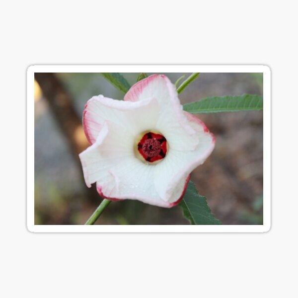 Star Hibiscus Flower Sticker