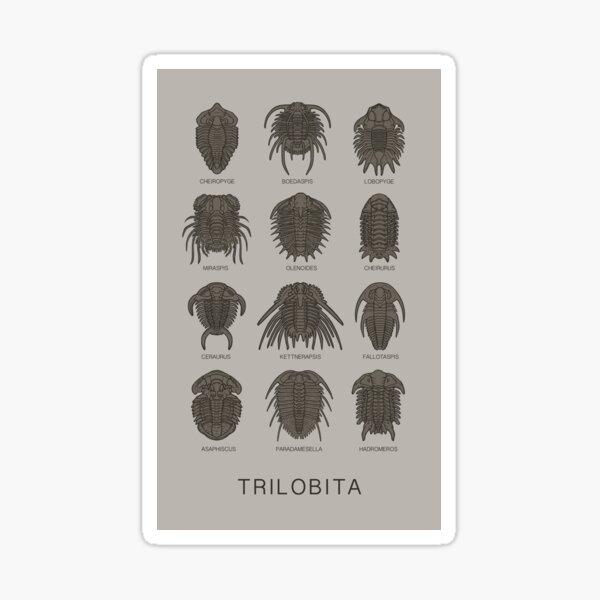 Trilobita Sticker