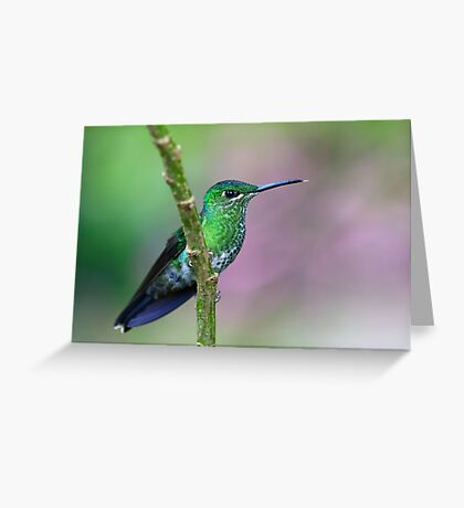 Green-Crowned Brilliant Hummingbird - Costa Rica Greeting Card