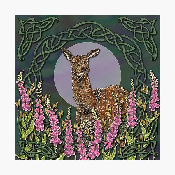Celtic Deer Photographic Print