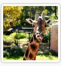 Baringo Giraffe Sticker