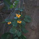 Black eye susan flowers by richeriley