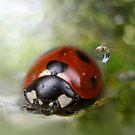 The tiny ladybug by EbyArts