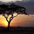 Kenyan Sundown by phil decocco
