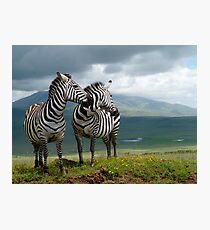 Two Zebras Photographic Print