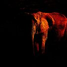 Save the Elephant by Sarah Vernon