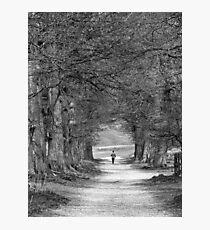Avenues Photographic Print