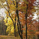 Autumn lane by Elena Skvortsova