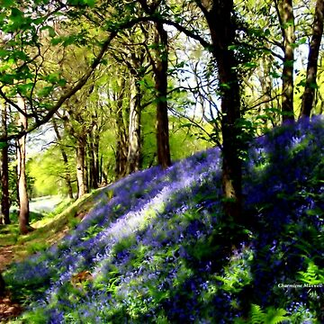 Bank of Bluebells by Sita