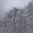Darkness Descends on the Blizzard Trees  by photolodico