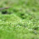 Mossy Moss Moss by photolodico