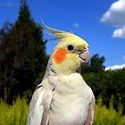 Pretty Bird by Steven  Agius