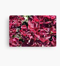 Texture with pink purple leaves. Canvas Print