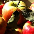 Autumn Apples by AngieDavies