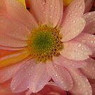 Pink flower by Jasna Bogdan