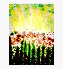 Sunshine on the Garden Colorful Abstract  Photographic Print