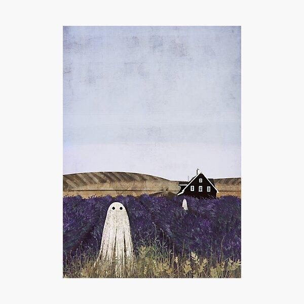 Lavender Fields Photographic Print