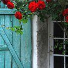 Les Portes-en-Ré - Roses au volet. by Jean-Luc Rollier