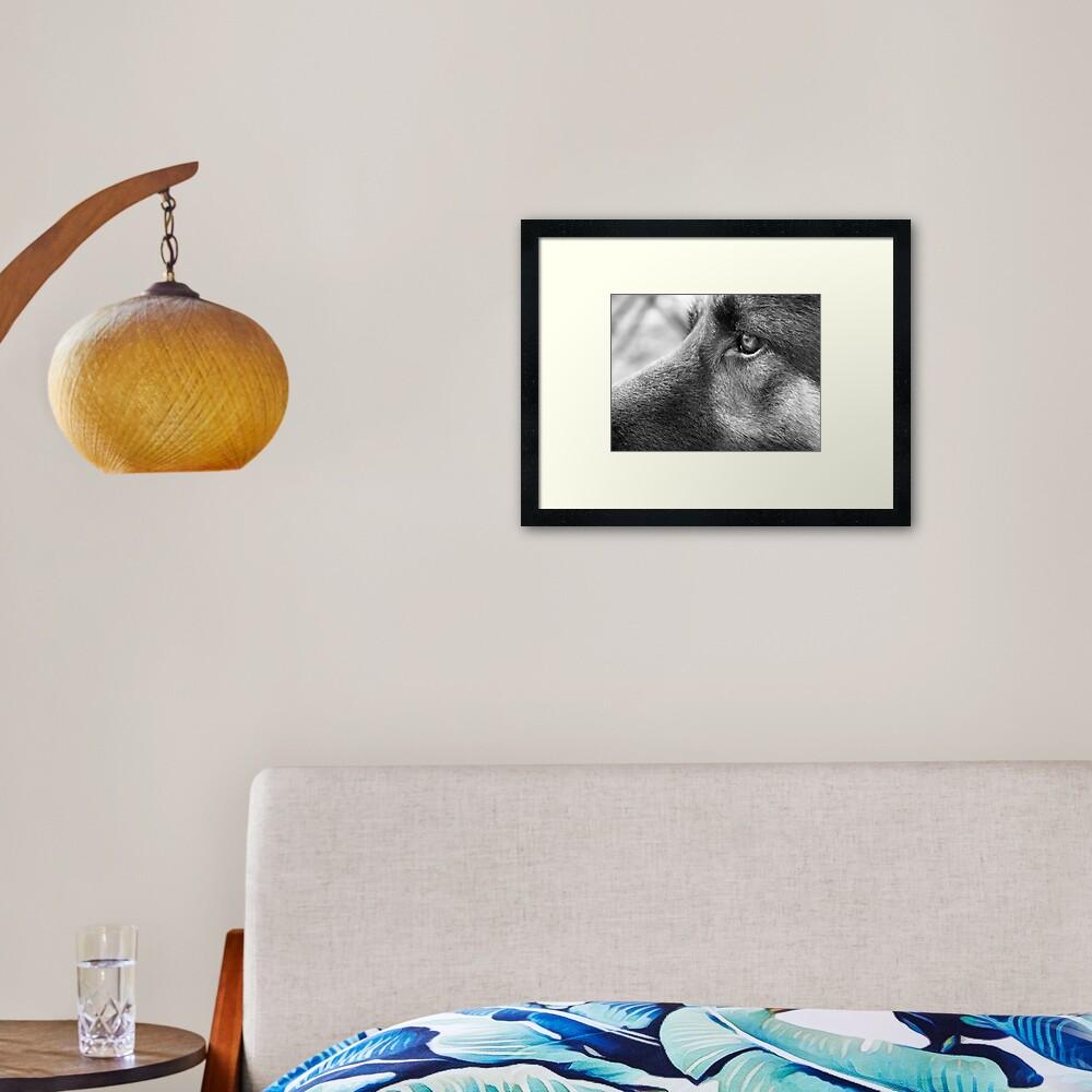 A Steady Gaze Framed Art Print