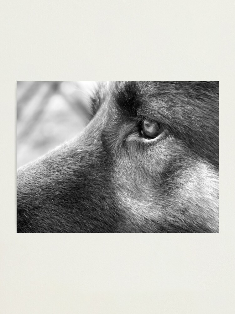 Alternate view of A Steady Gaze Photographic Print