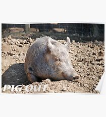 Pig in mud with pig out slogan Poster