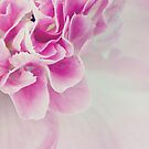 CAMELLIA by Bloom by Sam Wales