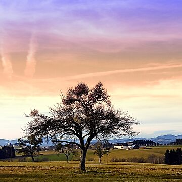 Old tree and amazing cloudy sky   landscape photography by patrickjobst