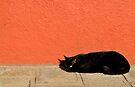 Black Cat Red Wall by Tiffany Dryburgh