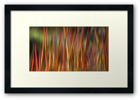 Wild Grass by Kitsmumma