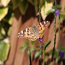 Painted Lady butterfly by richeriley